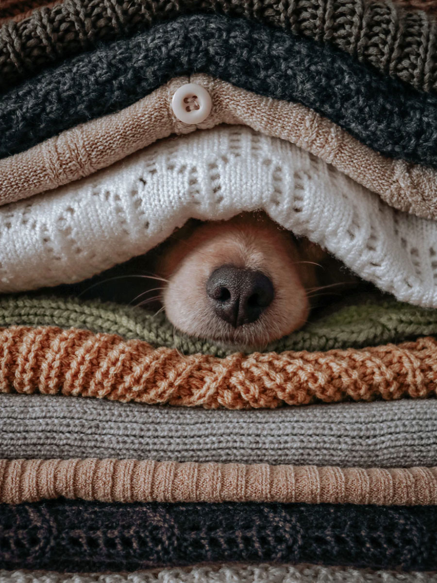 dog nose under blankets