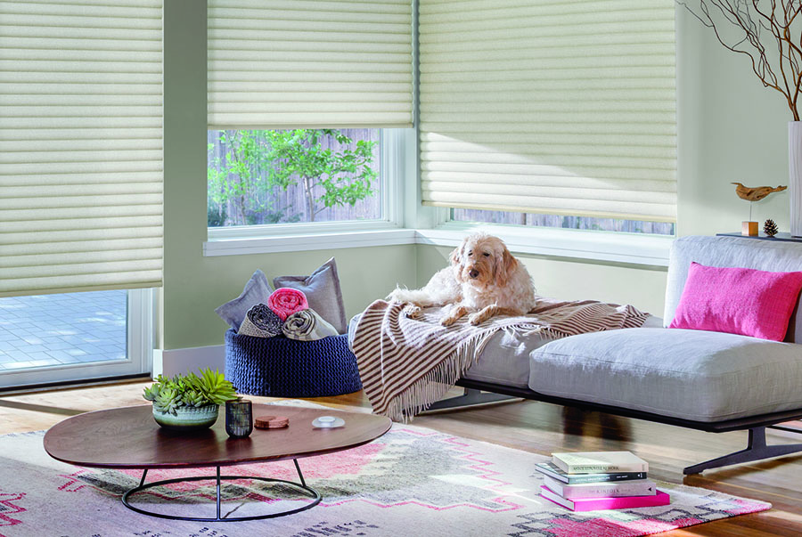 neutral roller shades puppy in living room St Paul, MN