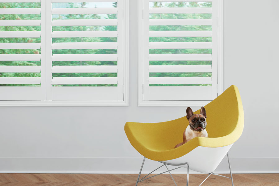 white shutters in living room with pup on modern chair in maple Grove MN